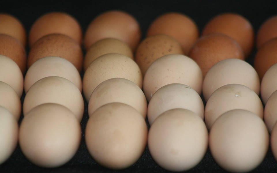 eggs-966479_960_720